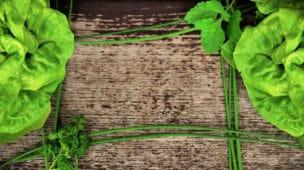 Conheça os 10 principais benefícios da alface - Imagem Destaque
