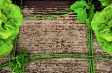 Conheça os 10 principais benefícios da alface