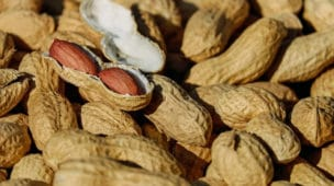 O amendoim é bom pra quê - Imagem Destaque